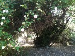 backyard 004